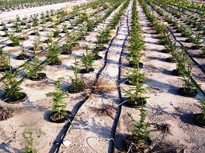 drip-irrigation-system